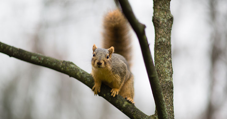 12042013_lc_squirrel_0003
