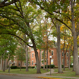 Oak trees line our beautiful campus