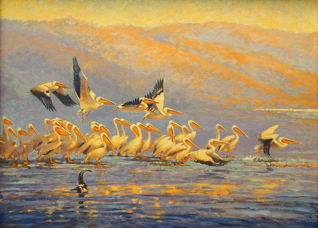 White pelicans of Africa